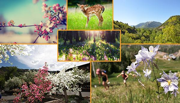 Spring in Aspen